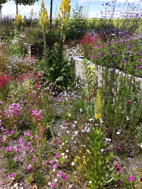 dry borders with raised beds at Olympic Park