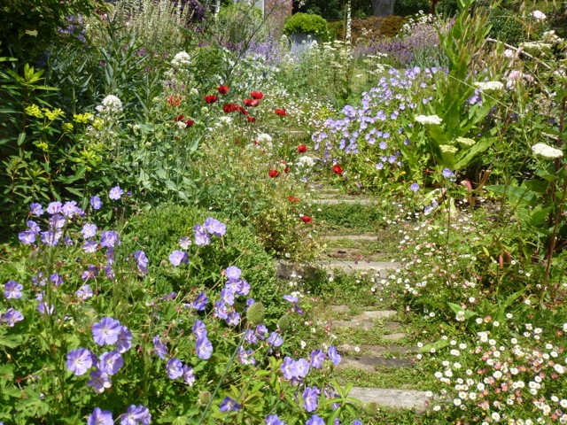 beautiful delicate flowers along a rustic garden path