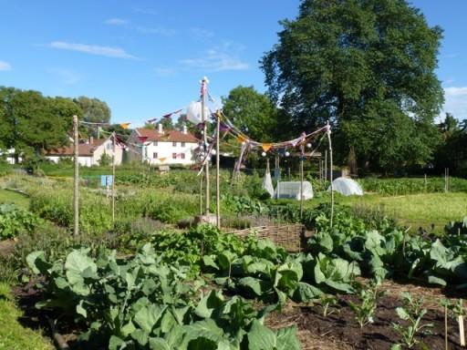 garden plot at Capellagardens
