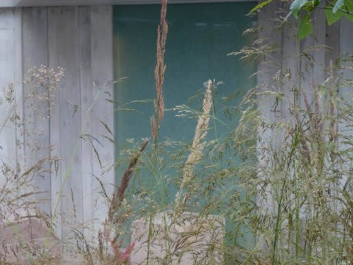 soft floaty grasses in the foreground, opaque glass in the background