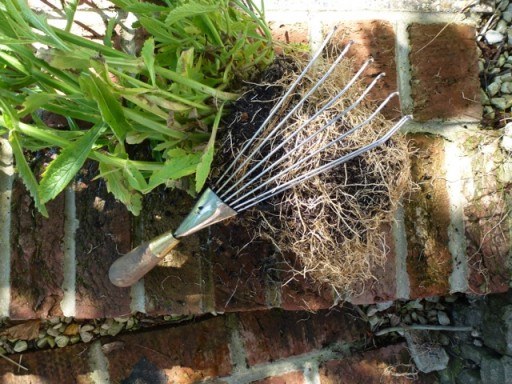 plant with root ball that has been tickled out.