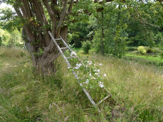 a rustic old fruit ladder against a tree