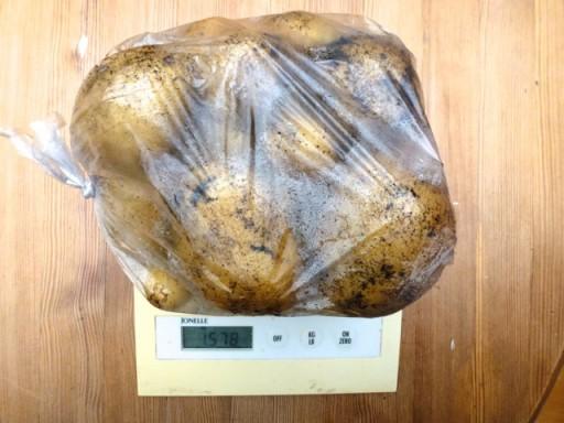 bag of potatoes on scal