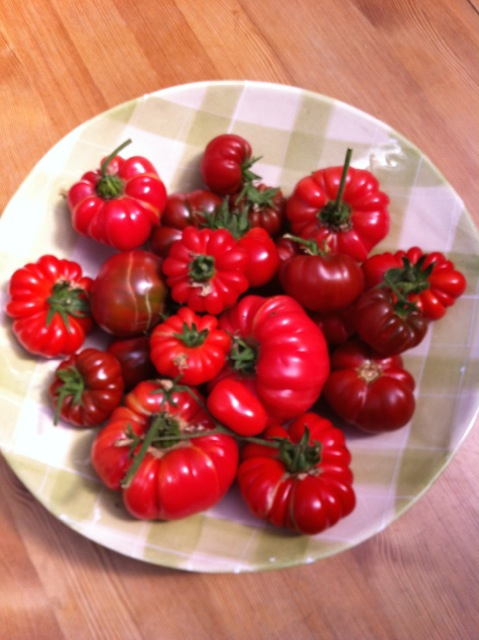 A bowl of home grown exotic tomatoes