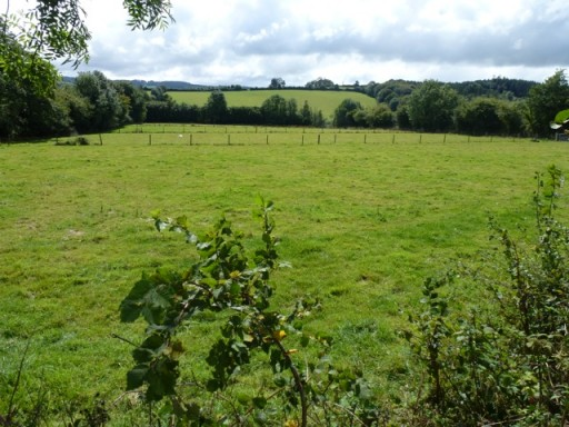 another lush field looking verdant