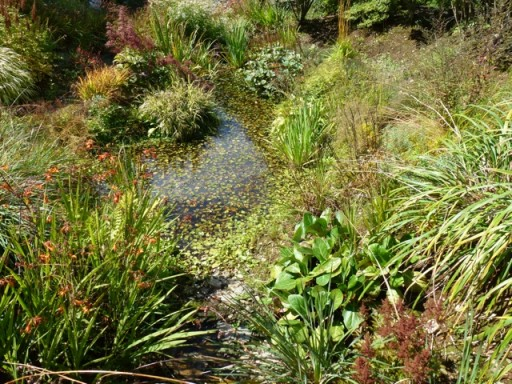 planting on mounds with ponds