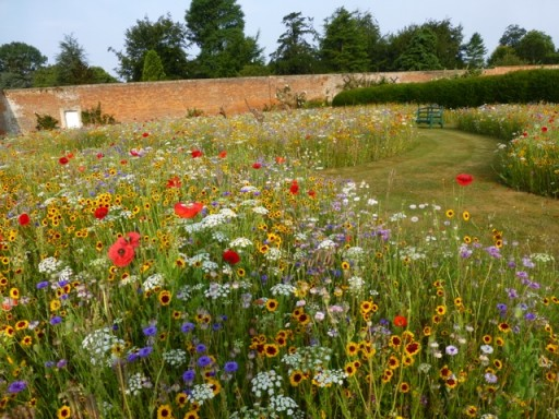 The Wildflower Garden at Bowood