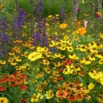 mixed flowers colourful border