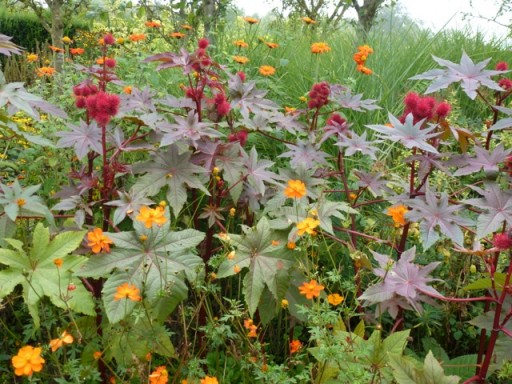 orange and red flowers in a border