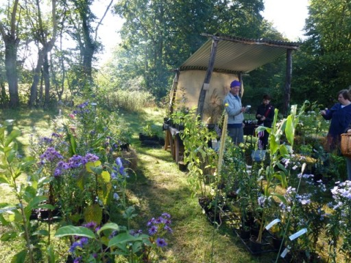 plant stall at the Great Dixter Plant Fair