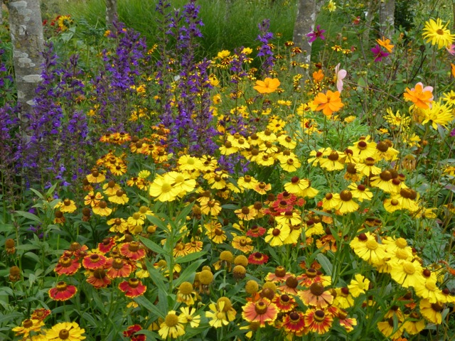 bright coloured planting scheme