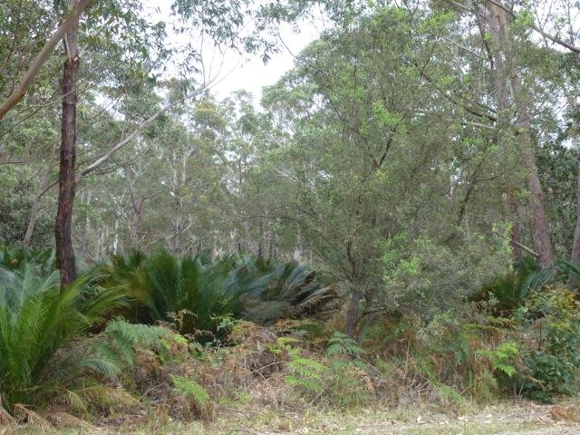 Dry rainforest of Australia