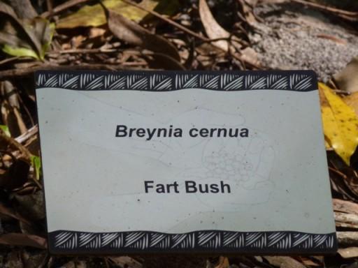fart bush
