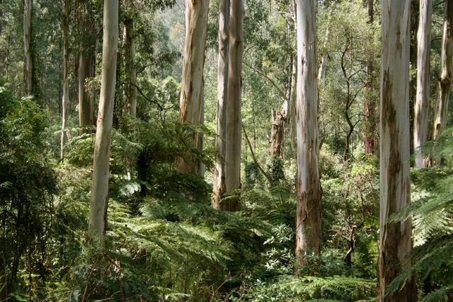 Wet rainforest of Australia