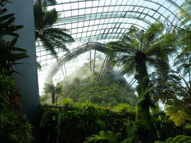 skywalk in the mist at the Singapore Biomes