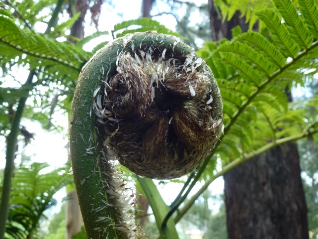 an architectural fern unfurling