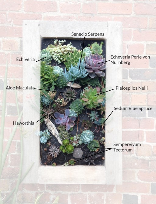 a drawing showing the plants used in the sedum planter