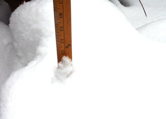 snow on agapanthus pots