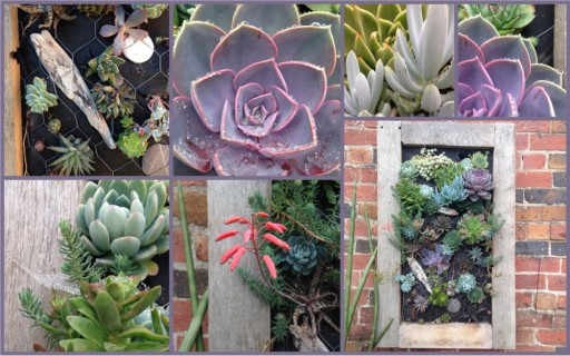 succulents in an oak framed frame mounted on an old brick wall