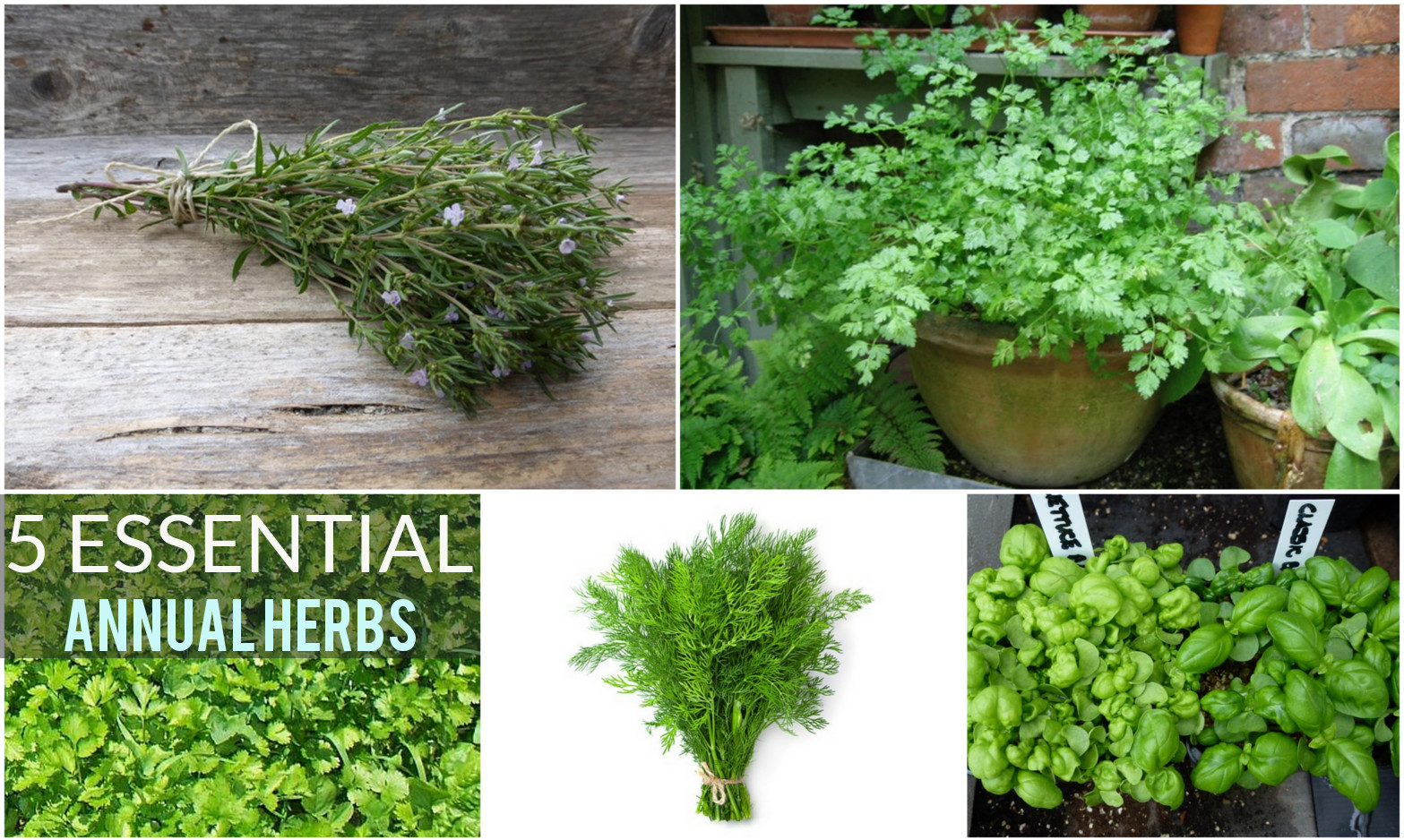 5 msut have herbs for any garden