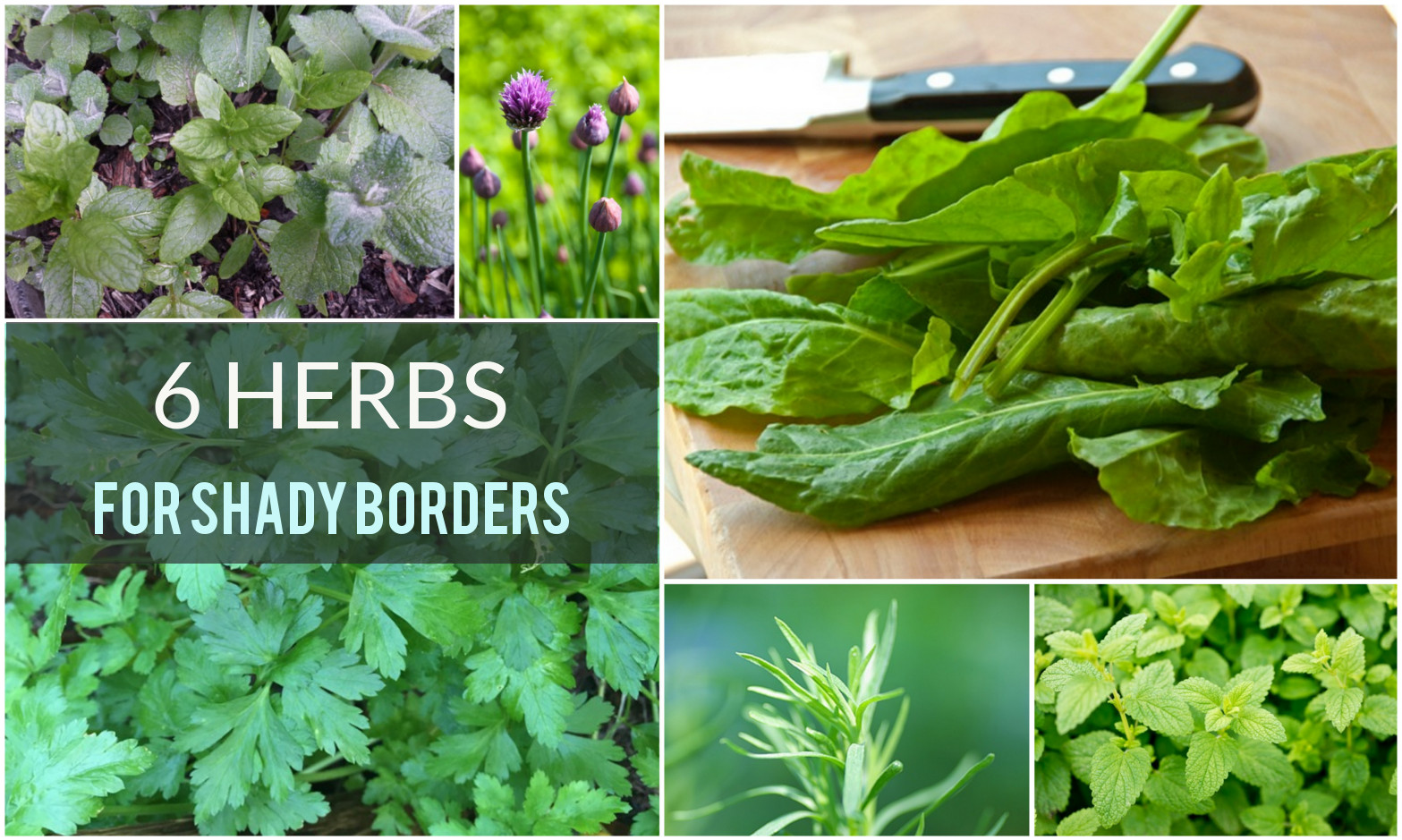 six herbs suitable for shady garden borders