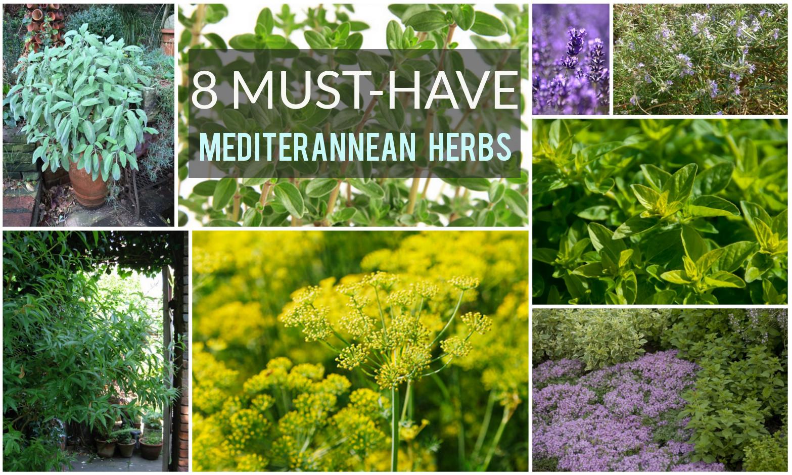8 popular mediterranean herbs