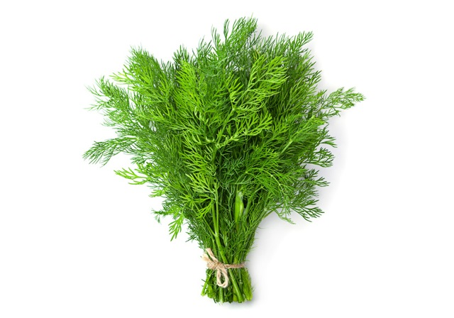 a bunch of fresh dill tied up