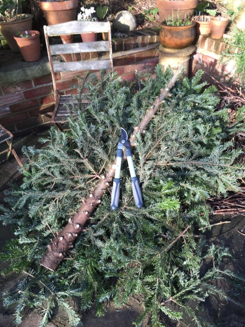 christmas tree has been lopped for recycling