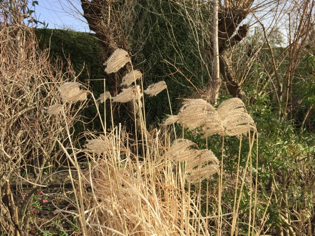 Seedheads still provide food for the birds