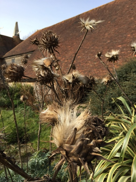 seedheads for the birds