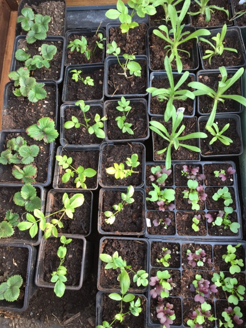 young seedlings full of life