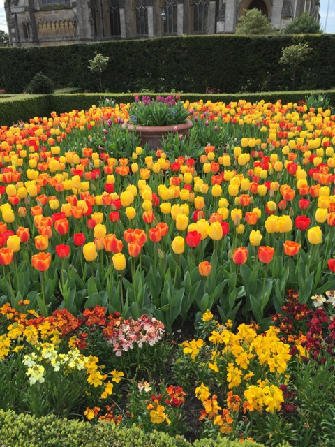 yellow and orange tulips mix at Arundel