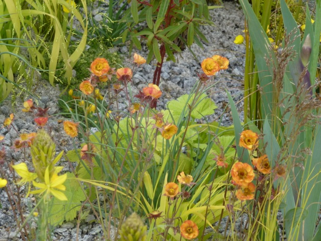 brown tinged orange geum called alabama slammer