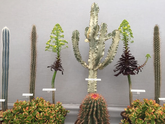 cactus display