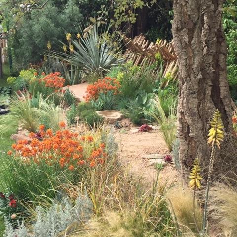 Sentebale garden at Chelsea 2015