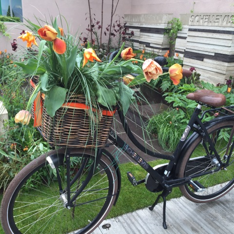 tulips growing from bike basket