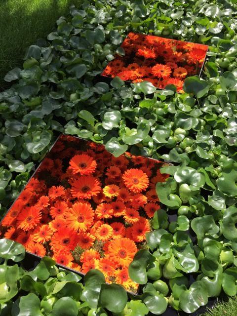 conceptual gardens at Hampton Court