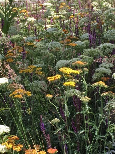 beautiful planting at Hampton Court Flower Show 2015