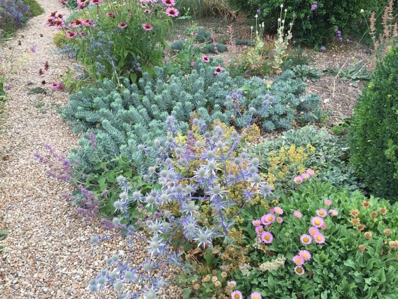 Plantagenet Plants perennials