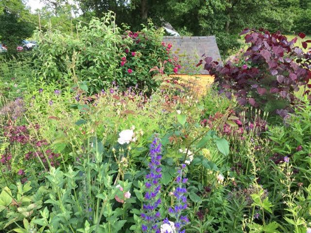 overflowing garden border
