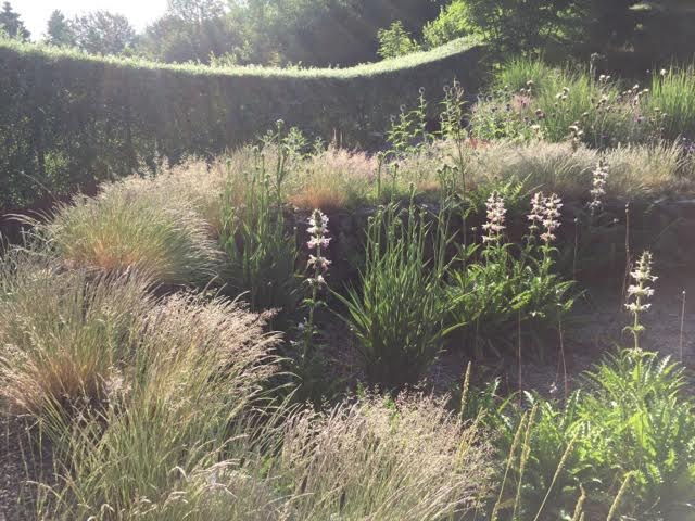 grasses in the Prickly Garden