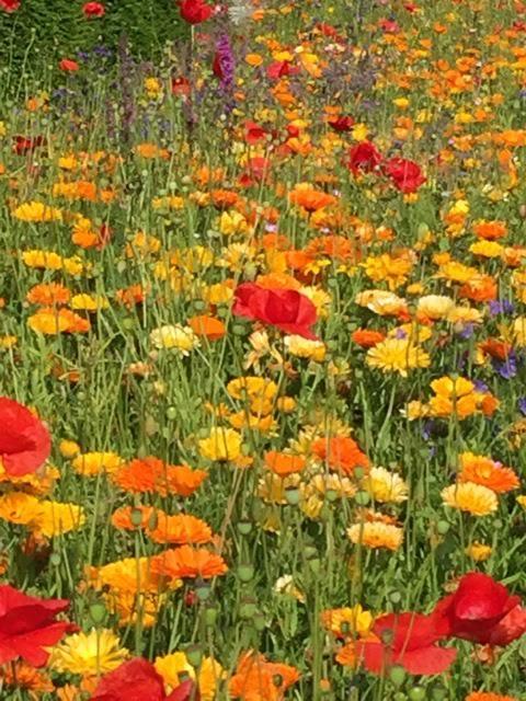 annual flowers at Culzean Castle