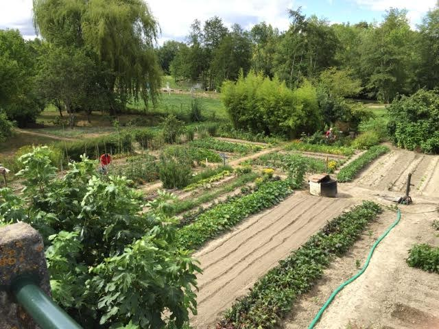 Immaculate allotments
