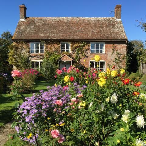 cottage garden dahlias