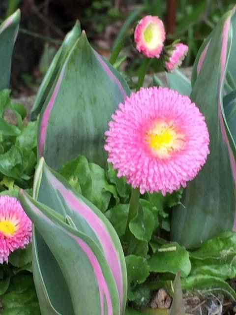 matching daisies