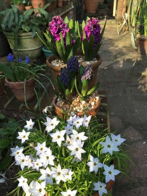 spring flowering bulbs