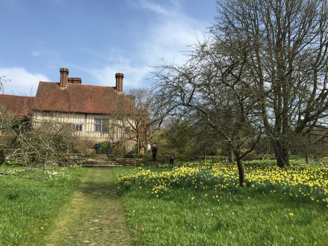 daffodils at great dixter