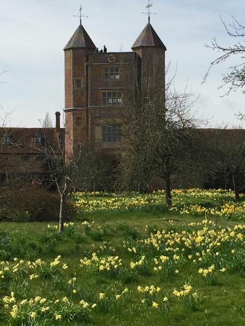 daffodils at sissinghurst