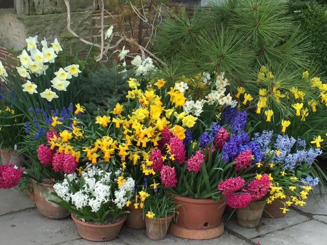 pots of spring blooms