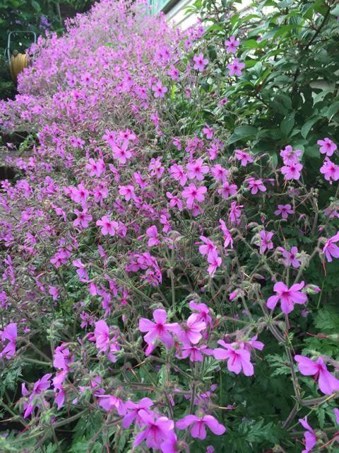 My Smelly Garden